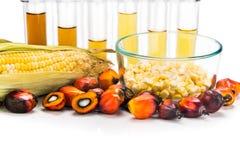 Le maïs de labyrinthe et le palmier à huile ont dérivé le combustible organique dans des tubes à essai image stock