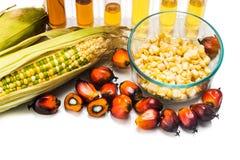 Le maïs et le palmier à huile ont produit de l'éthanol dans des tubes à essai, avec le COMBUSTIBLE ORGANIQUE photos stock