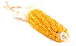 le maïs a isolé Images libres de droits
