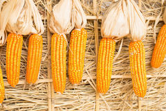 le maïs sec sur la paille emballe le fond Photo libre de droits