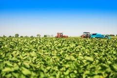 Le macchine agricole in una soia sistemano in un giorno di estate soleggiato Fotografia Stock Libera da Diritti