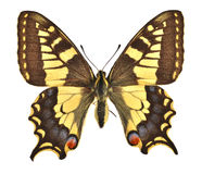 Le machaon européen Images stock