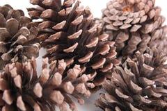 Le macro abstrait des cônes de pin d'isolement, se ferment vers le haut de la vue des cônes de pin pour des textures, le fond de  Photos libres de droits