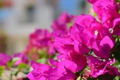 Le macro coloré fleurit le fond avec le ciel bleu Fin vers le haut Photo stock