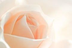 Le macro fleurit des roses Images libres de droits