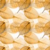 Le macro laisse la texture sans couture images stock