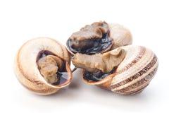 Le macro prend trois escargots sur le blanc Photos stock