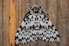 Le macro scoop de papillon d'insecte se repose sur un arbre (le foyer sélectif) Image stock