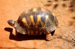 Le Madagascar Images stock