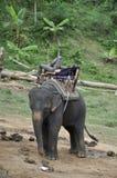 Le mahout endormi sur son éléphant pendant en Thaïlande Photo stock
