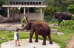 Le Mahout est des montées à l'éléphant dans le zoo images libres de droits