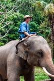 Le Mahout monte un éléphant Photographie stock libre de droits