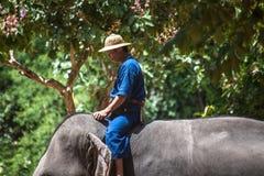 Le Mahout monte un éléphant Images libres de droits