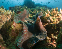 Le Maldive di corallo Fotografia Stock Libera da Diritti