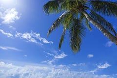 Le Maldive - viaggio al paradiso Fotografia Stock