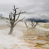 le mammouth chaud jaillit yellowstone photo stock