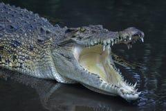 Le mandibole del coccodrillo hanno chiuso estremamente fotografie stock libere da diritti