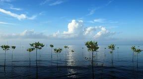 Le mangrovie Fotografie Stock Libere da Diritti