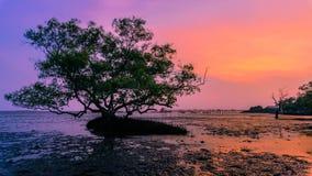 Le mangrovie in mezzo al mare nei precedenti è w Fotografia Stock Libera da Diritti