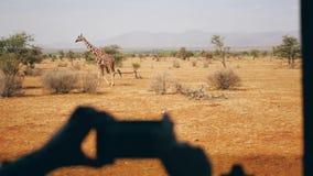 Le mani che tengono il telefono e prendono a foto la giraffa selvaggia che cammina sulla savana africana video d archivio
