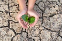 Le mani che tengono un albero che cresce sulla terra incrinata, conservano il mondo, problemi ambientali, proteggono la natura fotografie stock