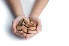 Le mani con il cane sano trattano, cibo per cani a secco della gelata Fotografie Stock