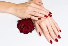 Le mani con il manicure rosso e sono aumentato Immagini Stock Libere da Diritti
