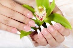Le mani con le unghie dipinte francesi artificiali lunghe che tengono un'orchidea fioriscono fotografia stock libera da diritti