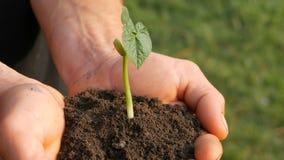 Le mani degli uomini dell'agricoltore tengono la terra in cui il germe di soia germogliato video d archivio