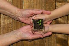 Le mani dei bambini e mani adulte che tengono il germoglio fotografia stock