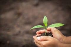 Le mani del bambino che tengono e che si preoccupano una giovane pianta verde, mano protegge le piantine che stanno sviluppando,  fotografie stock libere da diritti