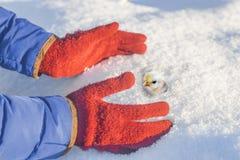 Le mani del ` s della donna con i guanti rossi prende il pollo nella neve Immagini Stock