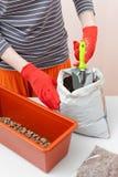 Le mani del ` s della donna in guanti versa il drenaggio ed il fertilizzante in un recipiente di plastica Preparazione dei semi p Immagini Stock