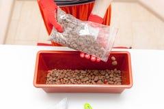 Le mani del ` s della donna in guanti versa il drenaggio ed il fertilizzante in un recipiente di plastica Preparazione dei semi p Fotografia Stock
