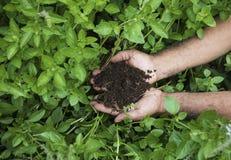 Le mani dell'agricoltore che tengono ecologicamente suolo sopra il giardino Concetto di ecologia Fotografia Stock