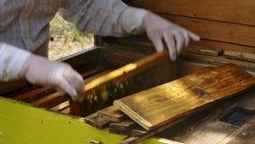 Le mani dell'apicoltore rimuove delicatamente le api dalla struttura stock footage
