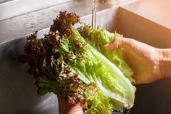 Le mani dell'uomo che lavano le foglie della lattuga Immagine Stock