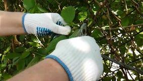Le mani dell'uomo hanno tagliato il giardino nella fucilazione lenta dei guanti stock footage