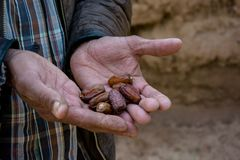 Le mani dell'uomo marocchino che insegnano di recente hanno selezionato le date immagine stock
