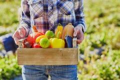 Le mani della donna che tengono cassa di legno con le verdure organiche fresche Fotografie Stock