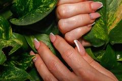 Le mani della donna che toccano le foglie delle piante d'appartamento fotografia stock libera da diritti