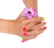 Le mani della donna con il manicure dopo la tenuta della stazione termale fioriscono Fotografie Stock Libere da Diritti
