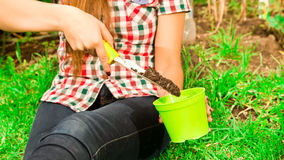 Le mani della donna del primo piano facendo uso del suolo di riempimento dello strumento di giardinaggio nel vaso di fiore verde Fotografie Stock