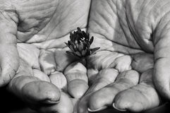 Le mani della forte donna Fotografia Stock