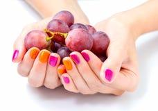 Le mani delle donne che tengono ramo dell'uva rossa Immagine Stock