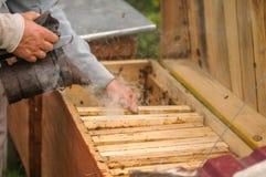 Le mani di un apicoltore che lavorano nell'alveare immagine stock libera da diritti