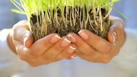 Le mani femminili danno la manciata di suolo con erba verde Concetto di crescita, cura, sostenibilità, proteggente la terra video d archivio