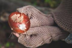 Le mani femminili in guanti tengono un fungo della foresta Fotografie Stock Libere da Diritti