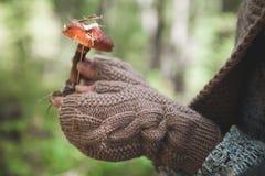 Le mani femminili in guanti tengono un fungo della foresta Immagine Stock Libera da Diritti
