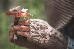 Le mani femminili in guanti tengono un fungo della foresta Immagini Stock Libere da Diritti
